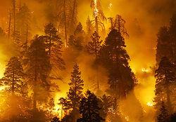 Дальневосточные службы оказались не готовыми к лесным пожарам