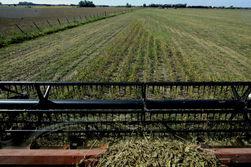 Рынок соевых бобов: рекордный урожай оказывает давление на цены