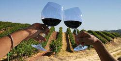 Зачем объединяются молдовские виноделы?