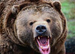 В Прикарпатье животные начали нападать на людей?