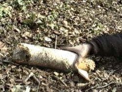 Женщина убила бывшего сожителя на Виннитчине