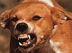 В Донецкой области женщину съели собаки
