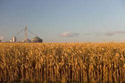 Каких цен ожидать инвесторам на кукурузу?
