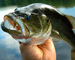 рыболовный промысел