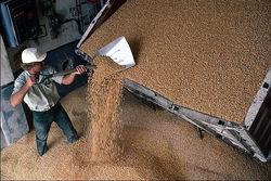 Удастся ли Казахстану наладить экспорт зерна на китайский рынок?