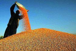 Чего стоит ждать инвесторам на рынке соевых бобов?