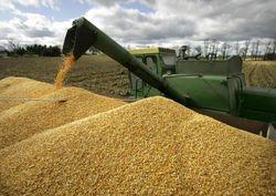 Какое количество лишнего зерна собрали в Казахстане?