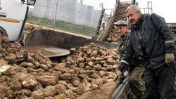 Беларусь завершила уборку картофеля