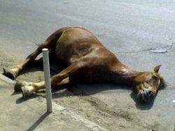 наезд на коня