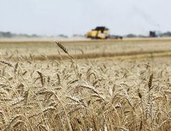 Более 6,6 млн. тонн зерновых
