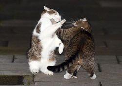 Кот премьера и кошка министра финансов снова дружат