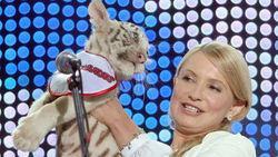 Четырёх тигрят родила тигрица Тимошенко