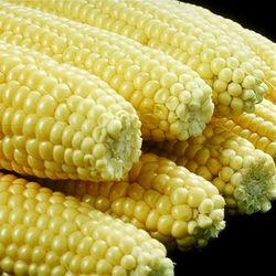 По последним прогнозам на 2012-2013 МГ мировое потребление кукурузы составит 849 млн. тонн