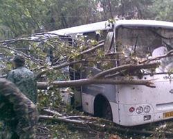 Дерево раздавило маршрутку