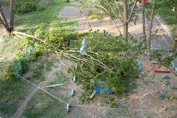 Дерево, упавшее на детскую площадку