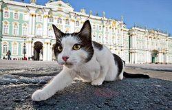 Эрмитаж показал посетителям музея своих котов