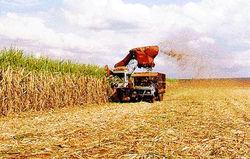 Глобальное понижение цен на сырьё и сахар