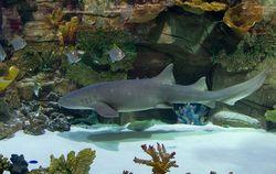 В Киеве в ТЦ Ocean Plaza появилась новая акула – самая большая в Украине