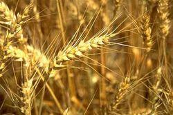 Индонезия и Казахстан подписали договор на поставки зерна