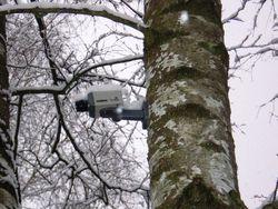леса оснастят видеокамерами