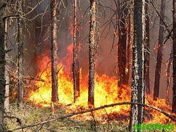 Масштабы пожара в Херсонской области