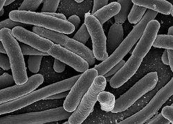 MyMicrobes