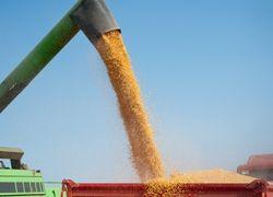 В Украине намолочено 40,1 млн. тонн зерна