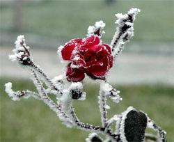 На Украину идут заморозки