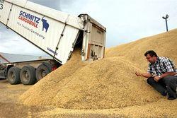 Упали 4 дальние позиции пшеницы