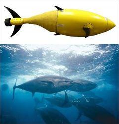 В США разрабатывают робота-тунца