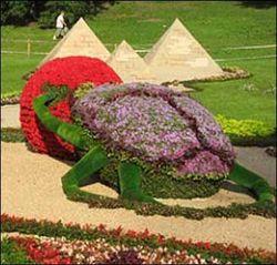 Новая выставка цветов