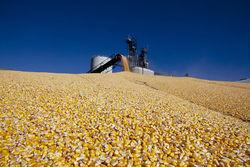 Трейдеры о рынке кукурузы после отчетов WASDE