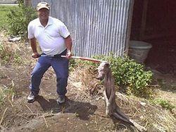 Селяне и милиция ловят чупакабру