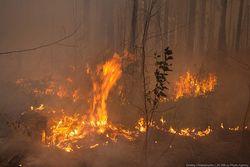 Подмосковье страдало от пожаров