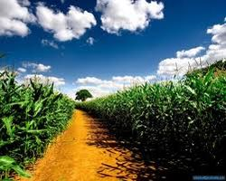 Земля в США дорожает, невзирая на засуху
