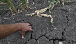 США страдает от засухи
