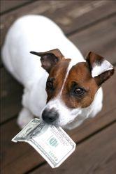 налог на домашних собак и кошек