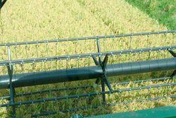 Посевные площади риса