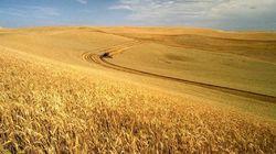 РФ продала четверть экспортного потенциала зерновых