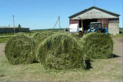 Рост цен на сено из-за засухи в США