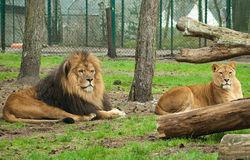 Сафари-парк в Крыму отныне является заповедником