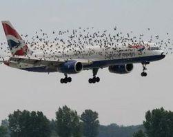 Самолет вице-президента США в Калифорнии столкнулся с птицами