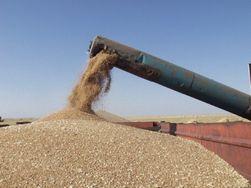 Экспорт зерна и муки