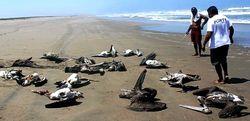 Северное побережье Перу