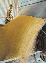 Слабый урожай зерна