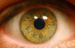прототип сетчатки глаза