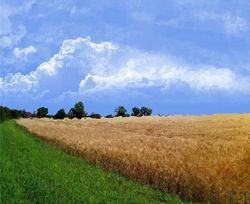 обвал рынка зерновых