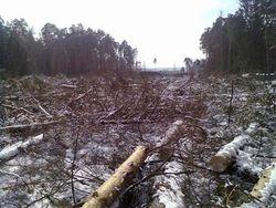 Строительство в Цаговском лесу