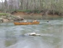 Верный пес спасает друзей на воде