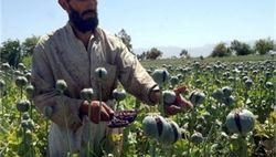 Таджикистан скинуться на покупку наркотиков